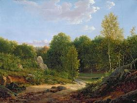 View of Fontainebleau Forest