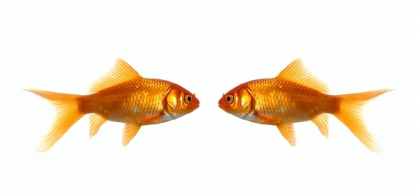 Two fish meeting
