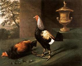 Portrait of `Phenomenon', the silver-laced bantam wearing spurs and standing over his victim