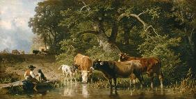 Guardian boy with cows at the watering-place