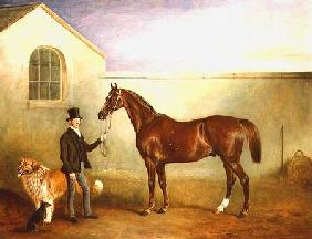 Mr Meakin holding Sir Robert Peel's Chestnut Hunter with his dogs 'Hector' and 'Jem'