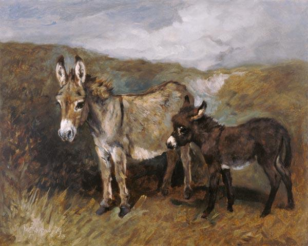 Donkeys out on the Moor