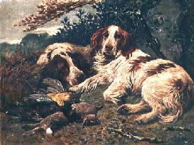 A Pair of Liver and White Clumber Spaniels by the Day's Bag