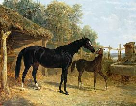 Levity, the property of J.C.Cockerill Esq., with her foal Queen Elizabeth, the property of Lord Dorc