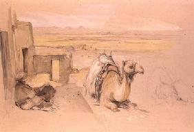 Camel, West Thebes