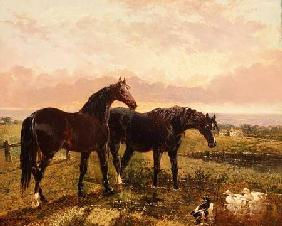 Two horses grazing at sunset