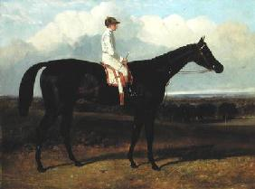 'Jonathan Wild' a Dark Bay Race Horse, at Goodwood, T.Ryder up
