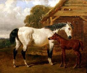 A Mare and Foal before a Barn