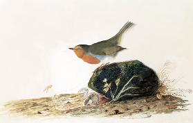 A Robin Perched on a Mossy Stone
