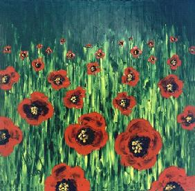 Poppy-seed meadow