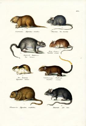 Different Kinds Of Mice
