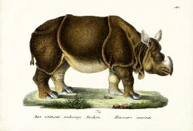 Greater Indian Rhinoceros