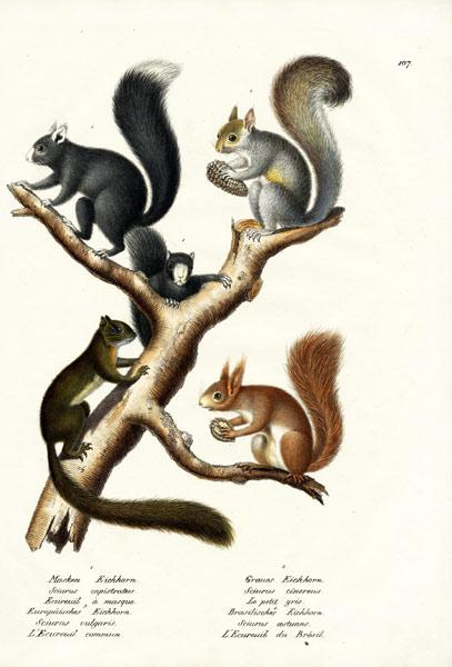Different Kinds Of Squirrels
