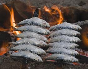 Spain Skewers or espetos of sardines barbecueing on open fire
