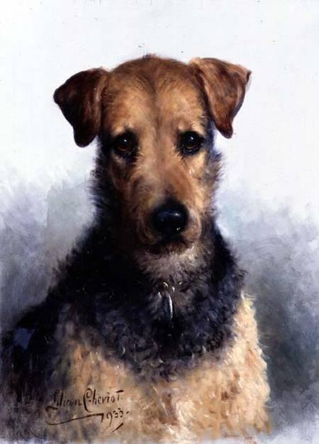 Wire Fox Terrier Ungroomed