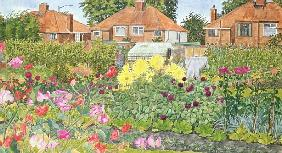 Allotments and Dahlias