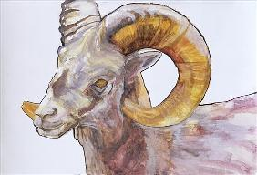 American Long Horn, 2004 (watercolour and acrylic on gesso on paper)