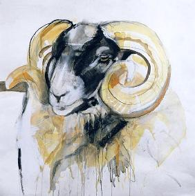 Long Horn Sheep (mixed media)
