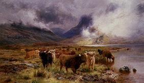 Highland cattles on the shore of the Tay