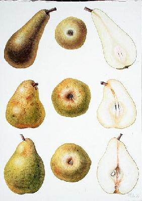 Six Pears, 1994 (w/c on paper)