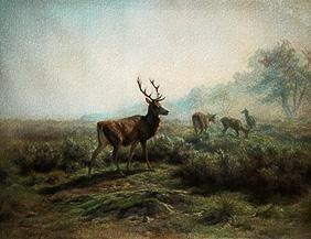 Red deer pack in a misty mountain landscape.