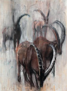 Stambecchi in Estate