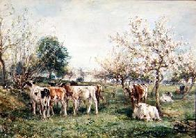 Calves in a Cherry Orchard
