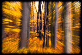 Blurred forest 3