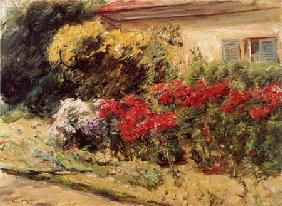 shrubs of flowers in front of the cottage of the gardener