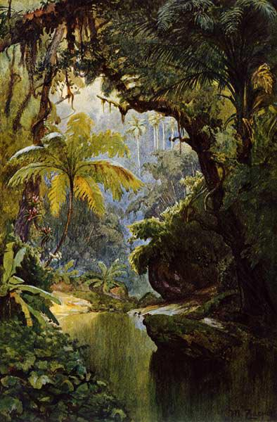 Brazilian Jungle , Zaeper