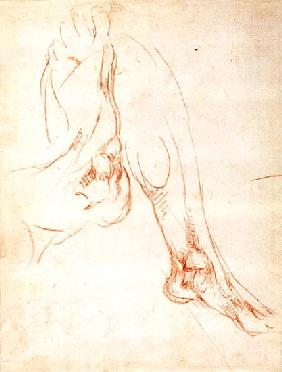 Study of a lower leg and foot