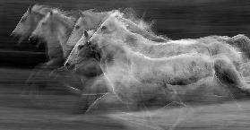 Gallop in the repetition