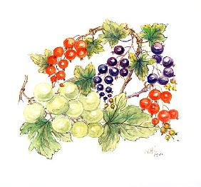 Black and Red Currants with Green Grapes, 1986 (w/c on paper)