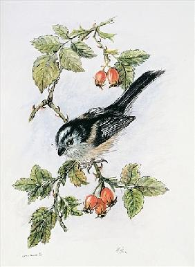 Long-tailed tit and rosehips
