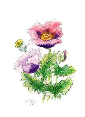 Opium Poppy, 2001 (w/c on paper)