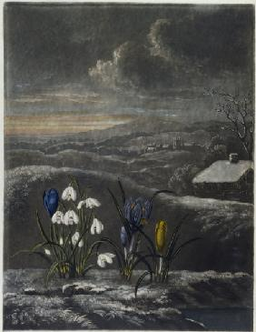 Snowdrops, crocusses / Aquatint