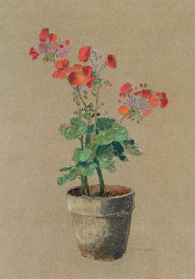 Geraniums in a pot (pastel)