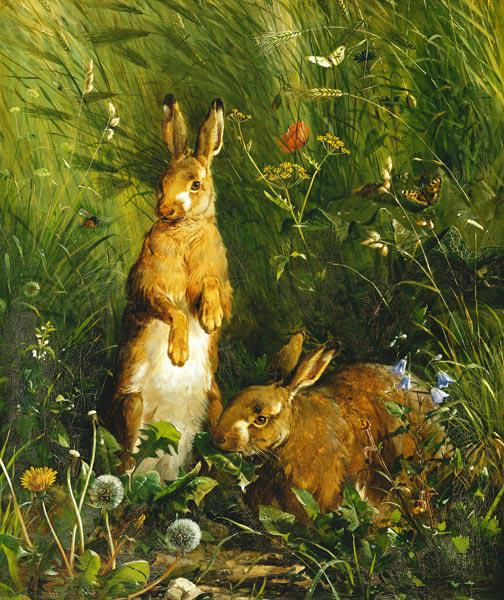 Rabbits in the meadow