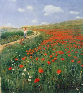 Summer landscape with a blossoming poppy