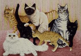 Stephanie''s Cats