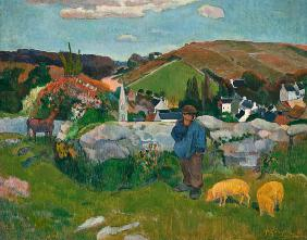 Coutryside in Bretagne (hurd of pigs)