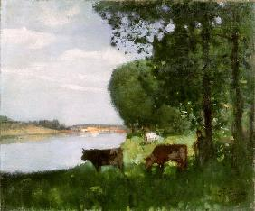 Herd of Cows by the River