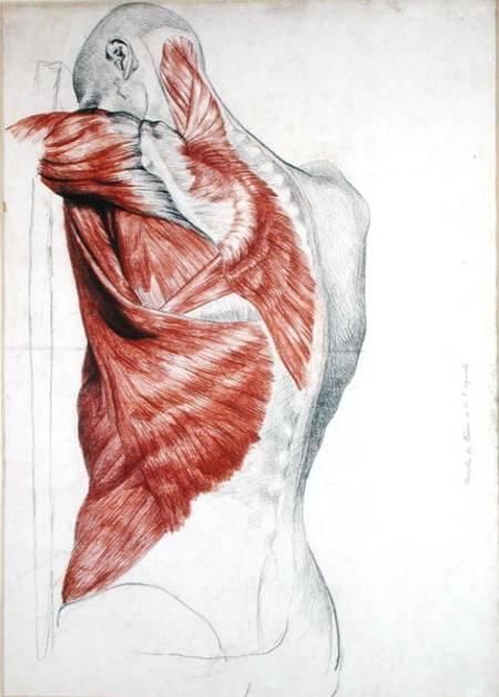 Human anatomy art