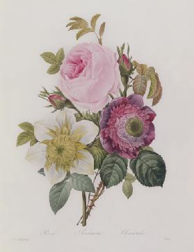 Rose, anemone and Clematide