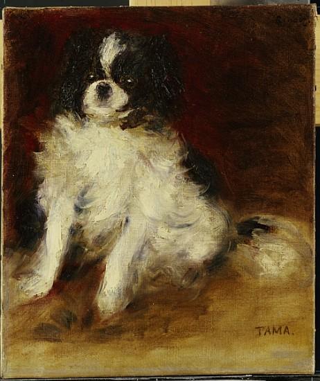 Tama Pierre Auguste Renoir as