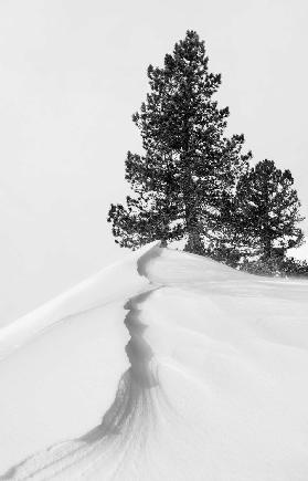 About the snow and forms