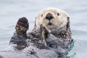 Yesterday I caught a fish thiiis big! - Otter. Alaska