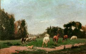 Horses Frolicking in the Meadow