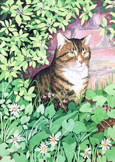 Cat air di kanvas