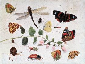 Butterflies, Insects and Flowers